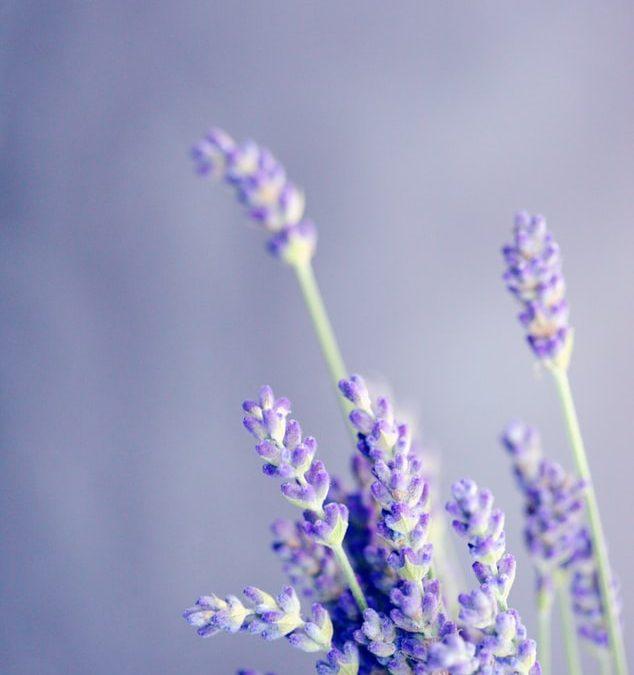 Bloemen bestellen in nijmegen bij de bloemist